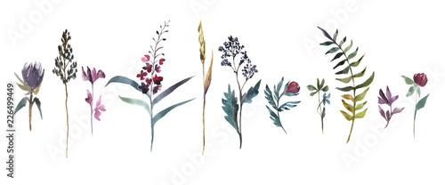 Fototapeta Watercolor illustration. Collection of field flowers. Herbs watercolor set. obraz