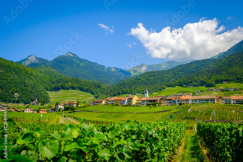 Poster Lime groen Summer Switzerland valley landscape with vineyards at foreground near Aigle