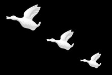 Three White Birds Flying - Wal...