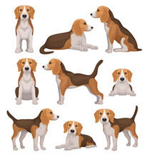 Flat Vector Set Of Beagle Dog ...