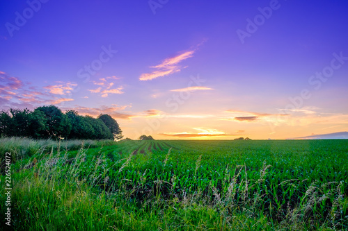 Deurstickers Groene Orne, France, June 2018, Maize field in the Normandy countryside between sunset and the blue hour