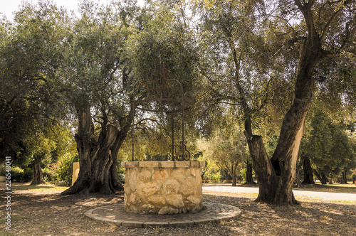 Fotobehang Bonsai Water well among olive trees in French Riviera in a summer day