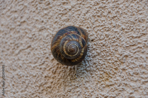 Photo A snail agglutinated on a house outer wall