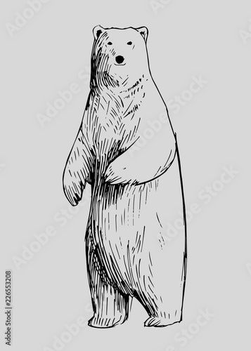 Sketch of polar bear. Hand drawn illustration converted to vector Fototapeta