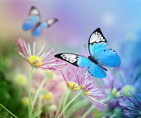 Panel SzklanyBeautiful blue butterfly and pink flowers. Summer and spring background