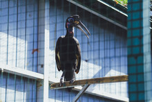 Bird Hornbill In The Zoo