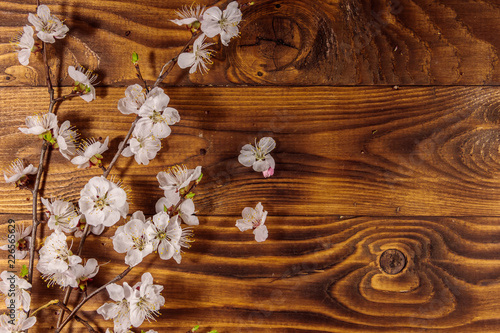 Fototapety, obrazy: Flowers of apricot tree on wooden background