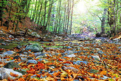 Poster Donkergrijs autumn stream in the forest, gold autumn European landscape