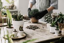 Woman Gardeners Hand Transplan...