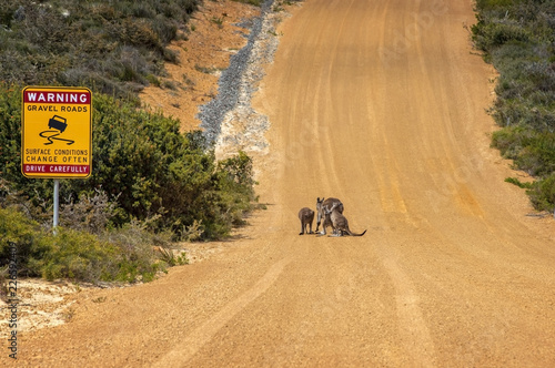 Foto op Plexiglas Oceanië Western Australia – outback track with warning sign and kangaroo family on the graveled road