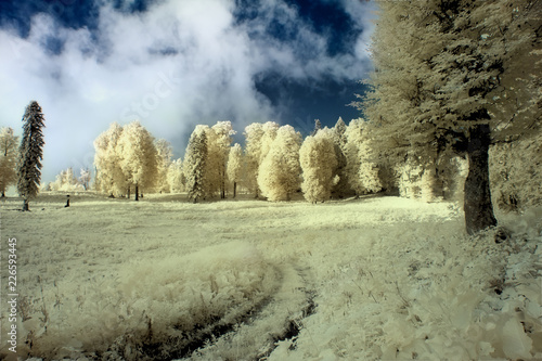 In de dag Olijf Summer landscape shot in the infrared range