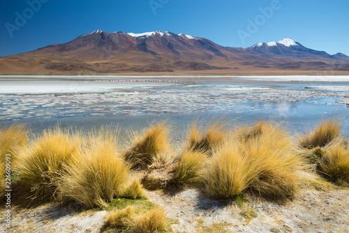 Fotografía  Laguna Hedionda landscape, Altiplano - Bolivia. South America.