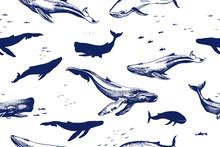 Sea Whales Seamless Pattern