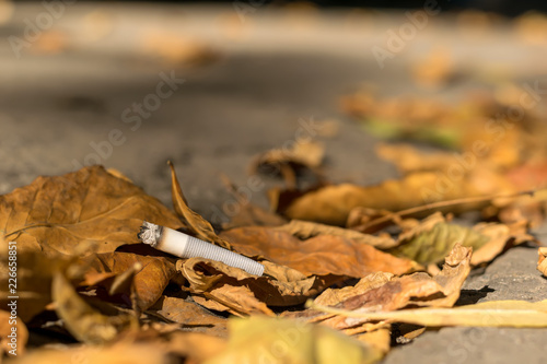 Fotografija  cigarette butt lies on the asphalt path on the fallen autumn leaves