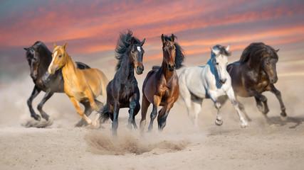Horses run gallop free in desert dust against storm sky