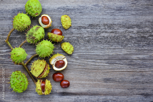 Chestnut on old wooden background with copy space for your text. Top view