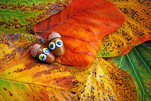 Acorn Eyes Autumn Leaf
