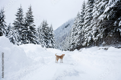 Fotobehang Magical winter wonderland landscape with frosty bare trees and dog in distance
