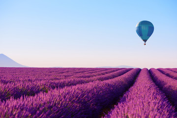 Fototapeta Do baru Lavender field and hot air balloon