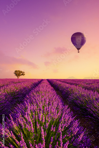 Lavender field rows at sunrise and hot air baloon France Provence
