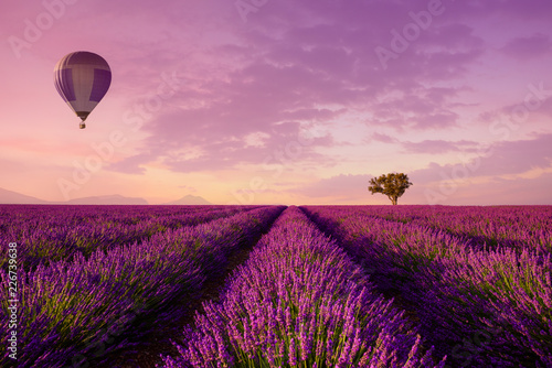 Fototapeta Lavender rows lines with lonely tree and hot air balloon at sunset iconic Provence fields landscape obraz