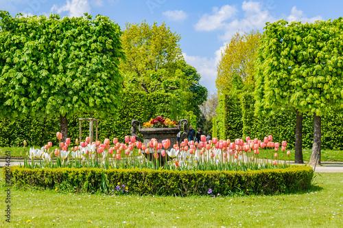 Photo  Flowers in Schoenbrunn Palace in Vienna, Austria