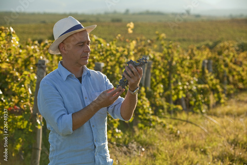 Fotografía  Farmer, winemaker looking at grape bunch at the grape yards on sunset