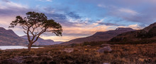 Sunset At A Lone Scots Pine On The Shores Of Loch Maree In Wester Ross In Scottish Highlands