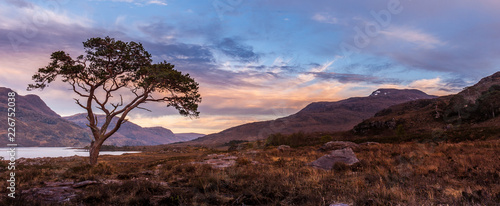 Fényképezés  Sunset at a lone scots pine on the shores of Loch Maree in Wester Ross in Scotti