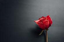Dry Red Rose On Black Background