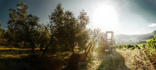 Sunrise Over Tuscan Agricultur...