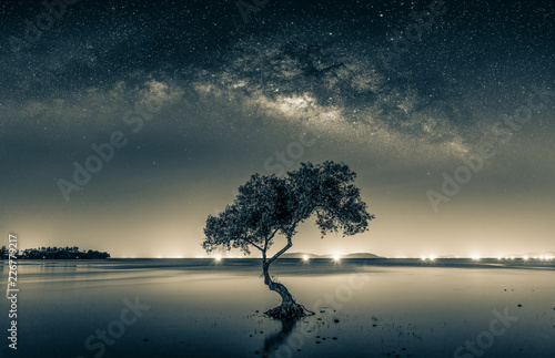 Foto  Black and white image of Night sky with stars and silhouette mangrove tree in sea