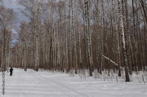 Tuinposter Berkbosje forest in winter