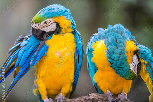 Tuinposter Papegaai Blue Parrot portrait with yellow neck in the park