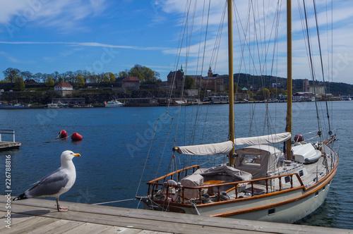Photo  Seagull Watching & Waiting