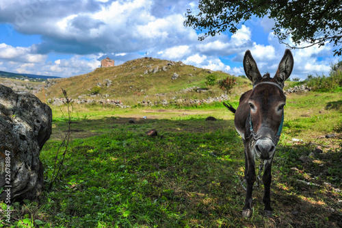 Donkey on a background of St. George's Dome Church located above the Dashbashi canyon in Tsalka region, Georgia