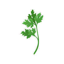 Sprig Of Parsley With Bright G...
