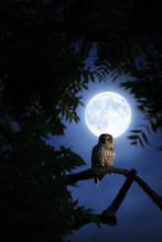 A Quiet Night, A Bright Moon R...