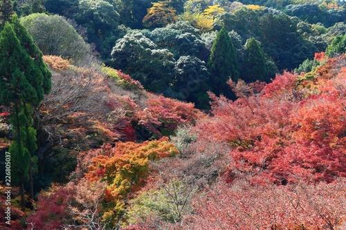 Foto op Plexiglas Japan Autumn in Japan