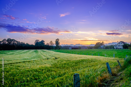 Deurstickers Groene Rye field in the Normandy countryside between sunset and the blue hour