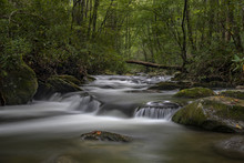 Tremont Great Smoky Mountains ...