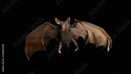 Blood thirsty vampire bat swooping in from the darkness Wallpaper Mural