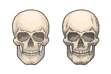Realistic Human Skull In The Style Of Vintage Engraving. Color Retro Hand-drawn Vector Illustration.