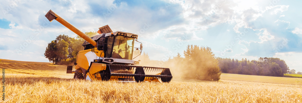 Fototapeta Combine harvesters Agricultural machinery. The machine for harvesting grain crops.