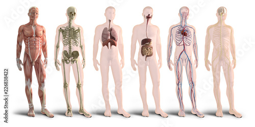 Carta da parati Digital 3d render of human body organs