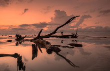 Sunrise On A Calm And Empty Beach With Driftwood And Reflections