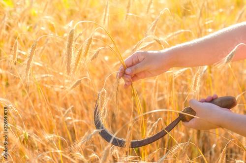 Leinwand Poster Girl cuts a sickle rye