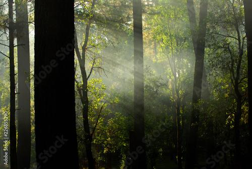 Fototapeta Rayos de luz obraz na płótnie