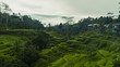 Beautiful natural view of the green fields of the Tegalalang rice paddies in the heart of Bali, Indonesia.