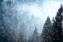 Snowfall In Foggy And Cloudy F...